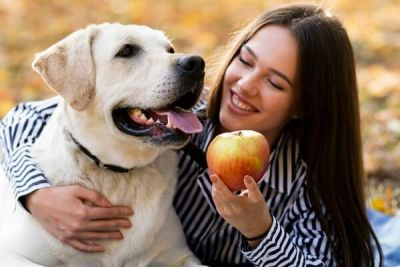 #HealthzexProducts  #HealthzexMagazine #Healthzex  #Apples  #ExpertTips  #Dogs Dogs love the taste of apple but sometimes it can be dangerous for some dogs. So before feeding apples consult your veteran. https://healthzex.com/nutrition/can-dogs-eat-apples/